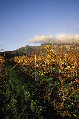 image 1-421-70 South Africa, Stellenbosch, Vineyards at dusk, Delheim winery