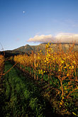 delheim stock photography | South Africa, Stellenbosch, Vineyards at dusk, Delheim winery, image id 1-421-70