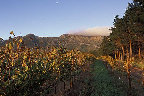 image 1-421-72 South Africa, Stellenbosch, Moonrise over Simonsberg, Delheim winery