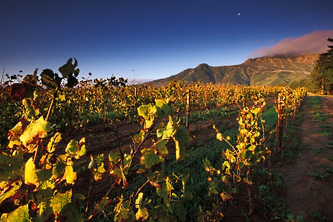 image 1-421-78 South Africa, Stellenbosch, Moonrise over Simonsberg, Delheim winery