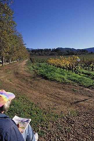 image 1-423-70 South Africa, Constantia, Painter and vineyards, Groot Constantia Wine Estate