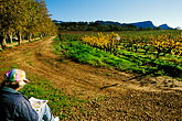 people stock photography | South Africa, Constantia, Painter and vineyards, Groot Constantia Wine Estate, image id 1-423-73