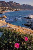 shoreline wildflowers stock photography | South Africa, Cape Town, Camps Bay and the Twelve Apostles, image id 5-452-1