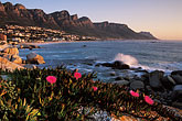 shoreline wildflowers stock photography | South Africa, Cape Town, Camps Bay and the Twelve Apostles, image id 5-452-7