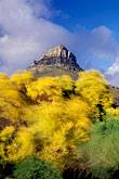 flora stock photography | South Africa, Cape Town, Lion