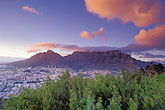 pink flowers stock photography | South Africa, Cape Town, Table Mountain and city at dawn from Lion
