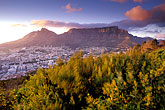 purple flower stock photography | South Africa, Cape Town, Table Mountain and city at dawn from Lion
