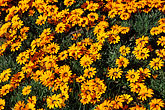 pattern stock photography | South Africa, Western Cape, Roadside flowers, image id 5-495-10