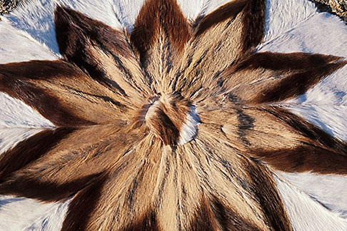 image 5-502-31 African Art, Rug made from springbok hides