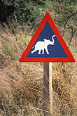 africa stock photography | South Africa, Cape Province, Elephant crossing!, image id 7-434-10