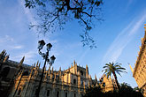 palm trees stock photography | Spain, Seville, Sevilla Cathedral, image id 1-252-4