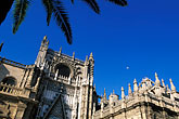 palm trees stock photography | Spain, Seville, Sevilla Cathedral, image id 1-252-51