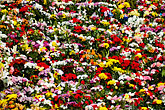 spain stock photography | Spain, Madrid, Flowers, image id S4-545-858