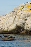 pinniped stock photography | Sweden, Fjallbacka, Seals on rocks, image id 5-710-5570