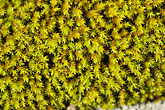 swedish stock photography | Sweden, Fjallbacka, Moss, image id 5-710-5606