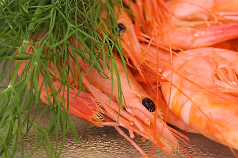 image 5-710-5684 Food, Shrimp with dill
