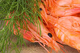 crustacean stock photography | Food, Shrimp with dill, image id 5-710-5684