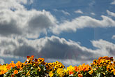 colour stock photography | Clouds, Clouds reflected in window with flowers, image id 5-720-3270