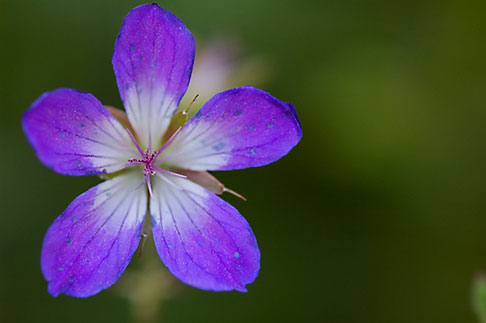 image 5-730-3670 Sweden, Grinda Island, Wildflower
