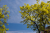 leaf stock photography | Sweden, Grinda Island, Tree and sky, image id 5-730-6410