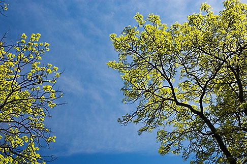 image 5-730-6413 Sweden, Grinda Island, Tree and sky