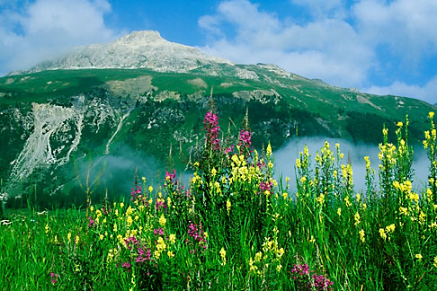 image 2-88-18 Switzerland, Engadin, Summer flowers near Samedan