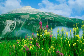 nobody stock photography | Switzerland, Engadin, Summer flowers near Samedan, image id 2-88-18