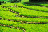 green stock photography | Thailand, Chiang Mai, Terraced rice fields, image id 0-363-33