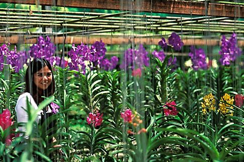 image 0-363-99 Thailand, Chiang Mai, Mae Raem Orchid Garden