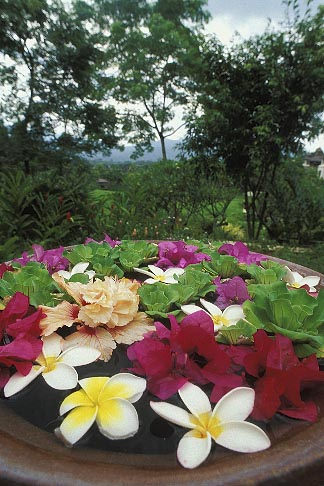 image 0-364-4 Thailand, Chiang Mai, Flowers in urn