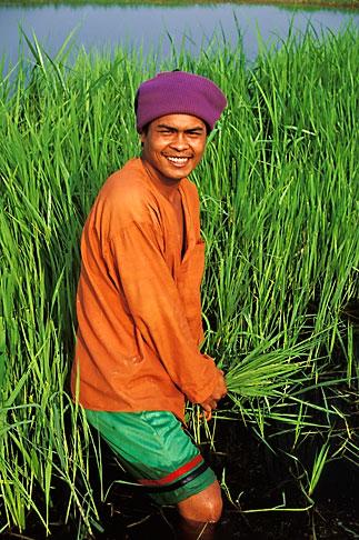 image 0-381-49 Thailand, Sukhothai, Rice farmer