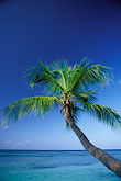 palm tree and clear blue water stock photography | Tobago, Palm, Pigeon Point, image id 8-58-28