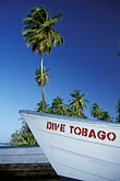 palm tree stock photography | Tobago, Dive boat , image id 8-64-26