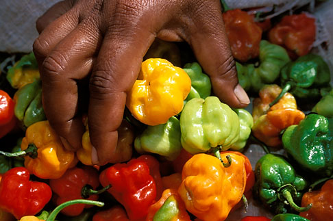 image 8-29-35 Food, Woman picking up red yellow and green peppers, close up of hand