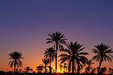 sunset stock photography | Tunisia, Nefta, palms at sunrise, image id 3-1100-23
