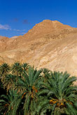 mountain stock photography | Tunisia, Oasis and palms, image id 3-1100-48