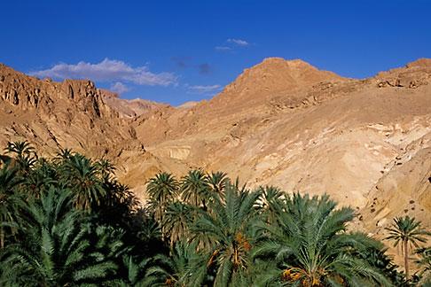 image 3-1100-49 Tunisia, Oasis and palms