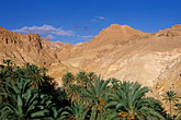 desert stock photography | Tunisia, Oasis and palms, image id 3-1100-49