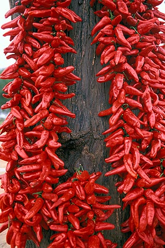image 3-1100-72 Tunisia, Chili peppers drying