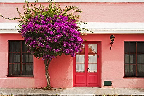 image 8-802-4376 Uruguay, Colonia del Sacramento, Pink painted historic building with Bougainvillea tree