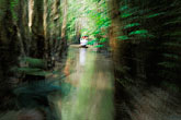 motion stock photography | Vietnam, Mekong Delta, Canoe ride through jungle, image id S3-196-6