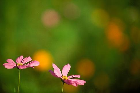 image 2-556-43 Alabama, Wildflowers