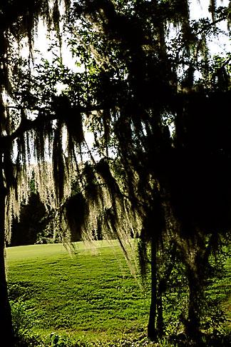 image 2-565-5 Alabama, Robert Trent Jones Golf Trail, Prattville, Capitol Hill, Spanish Moss