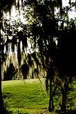 nature stock photography | Alabama, RTJ Golf Trail, Prattville, Capitol Hill, Spanish Moss, image id 2-565-5