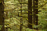 horizontal stock photography | Alaska, Kodiak, Spruce forest, image id 5-650-1675