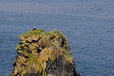 falconiformes stock photography | Alaska, Kodiak, Bald eagle on rock, image id 5-650-1731