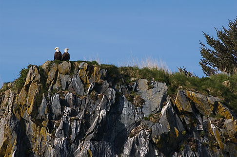 image 5-650-1763 Alaska, Kodiak, Bald eagles on rock