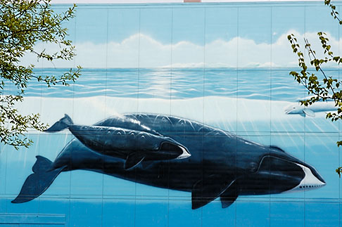 image 5-650-3671 Alaska, Anchorage, Whale mural