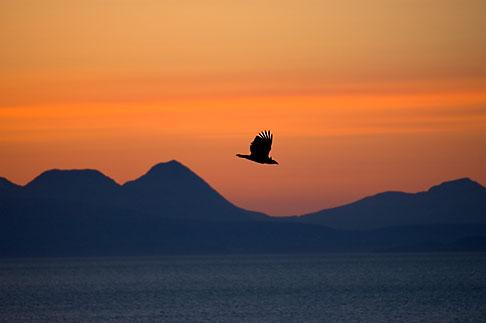 image 5-650-4358 Alaska, Kodiak, Eagle over Chiniak Bay