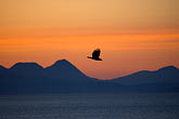 dusk stock photography | Alaska, Kodiak, Eagle over Chiniak Bay, image id 5-650-4358